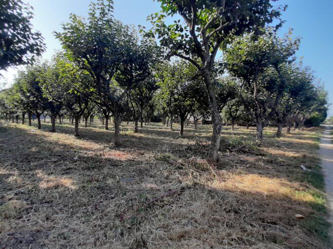 Terreno agricolo in vendita ad Angri via Santa Maria